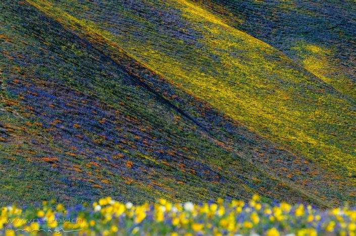 Tehachapi Mountains bunte Wiese Nordamerika