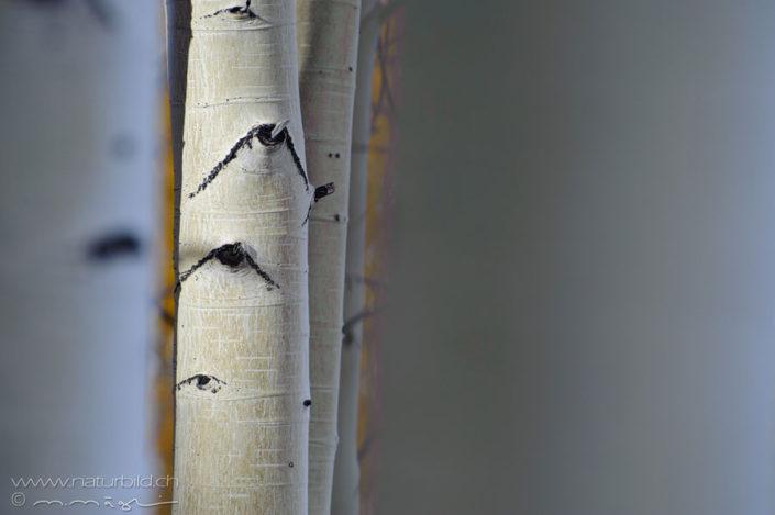 Utah Baumstamm kahl