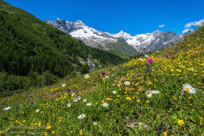 Val ferret Sommer Blumen