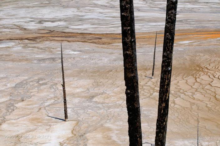Yellowstone verbrannter Baum Nordamerika