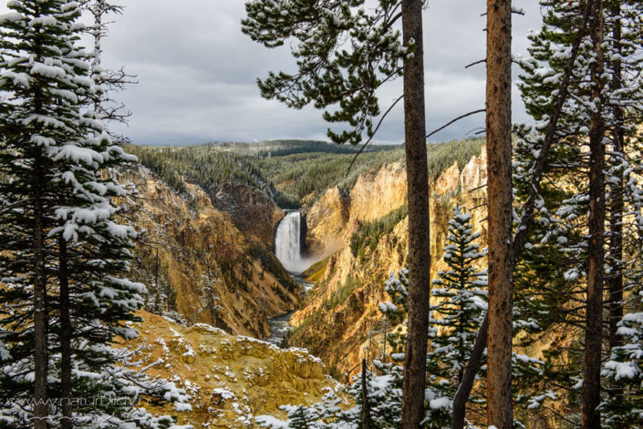 Yellowstone Wasserfall Winter