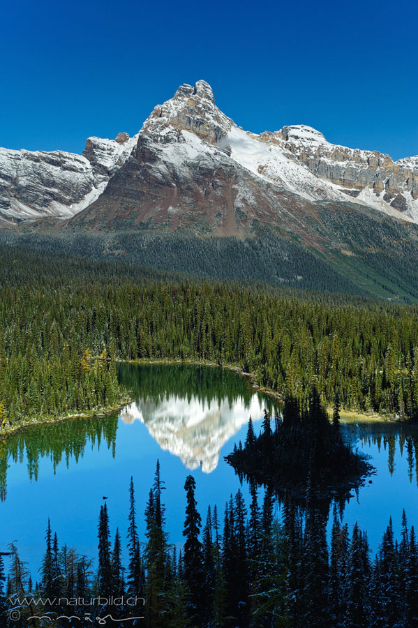 Yoho Canada Wald