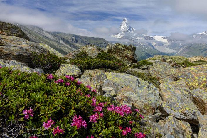 Steine Matterhorn Felsen