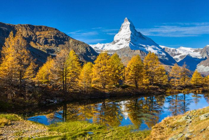 Zermatt Wallis Baeume