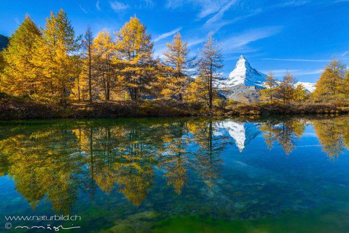 Lärchen Bergsee Matterhorn