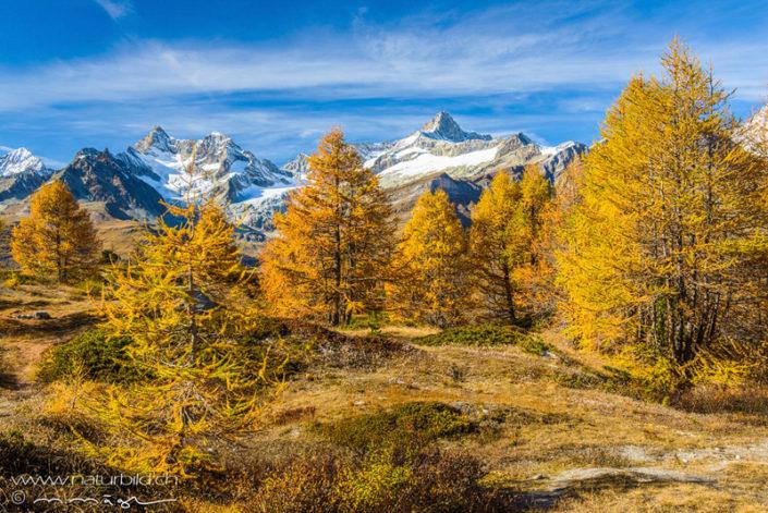 Zermatt Wallis gelb
