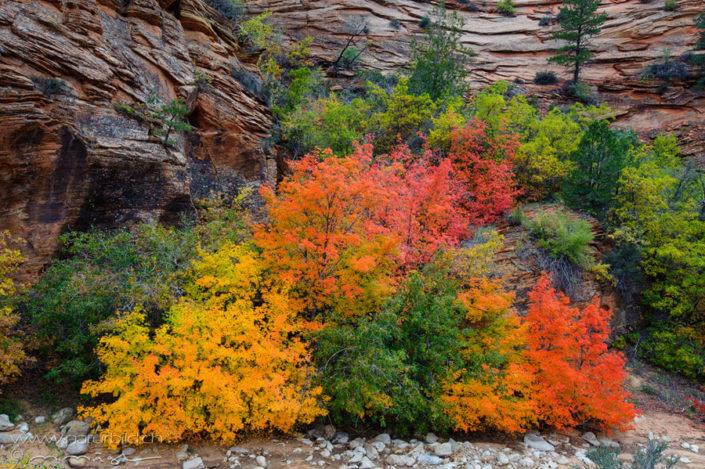 Zion NP Herbst Nordamerika