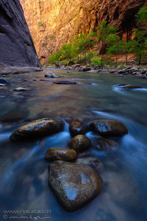 Zion Utah Bach