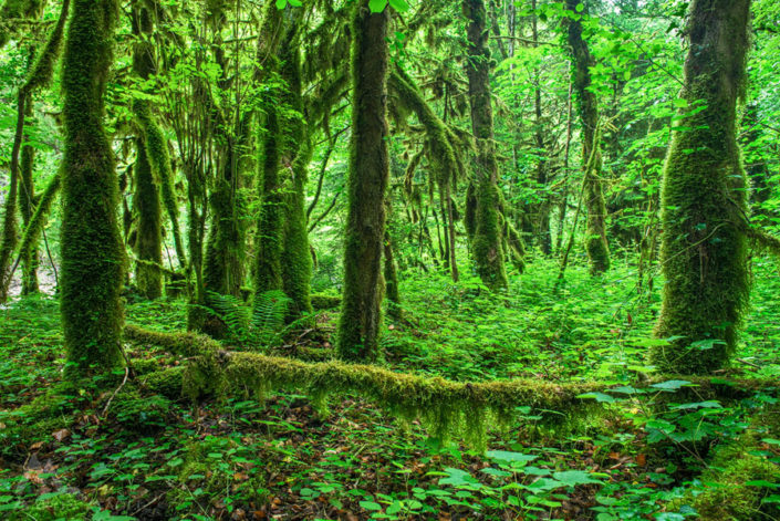 Aigle Moos Wald