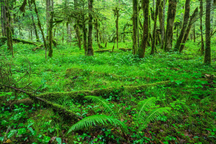 Aigle Wald Moos