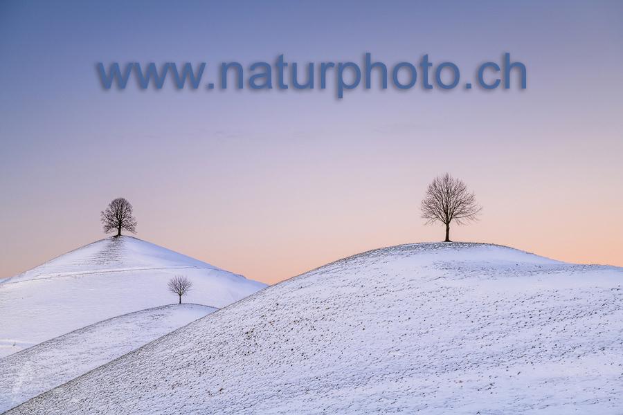 Neue Domain www.naturphoto.ch