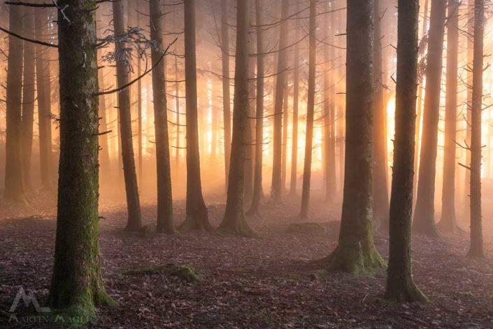 Wald Nebel Emmental