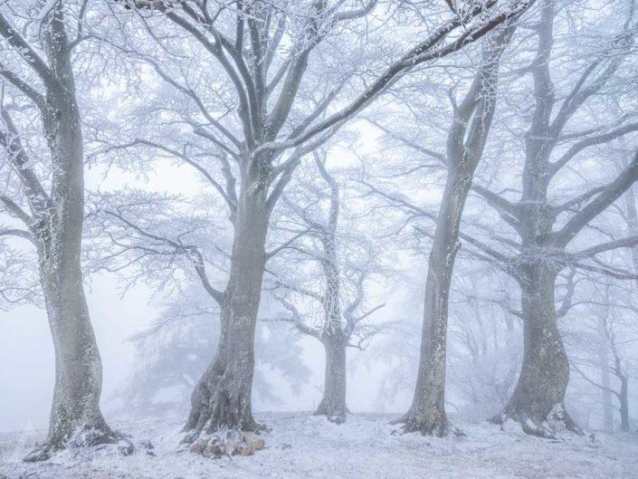 Wald Winter Nebel