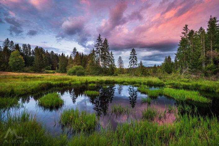Moor Sommer Naturschutzgebiet